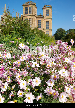 Japanese or Chinese Anemone hupehensis var japonica September Charm gracing the long border at Hardwick Hall in - Stock Photo