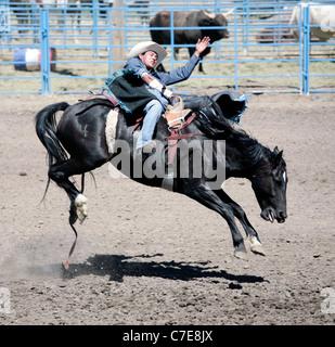Rodeo Cowboy Riding Bucking Bronco Horse Stock Photo