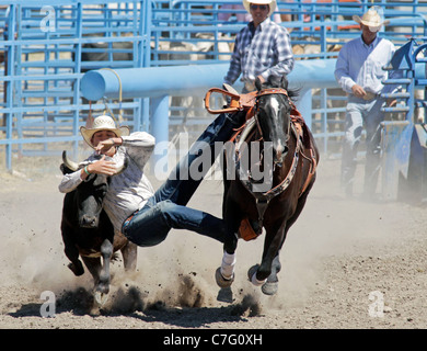 Competitor during the calf tie-down event of the rodeo held on the Fort Hall reservation in Idaho. - Stock Photo