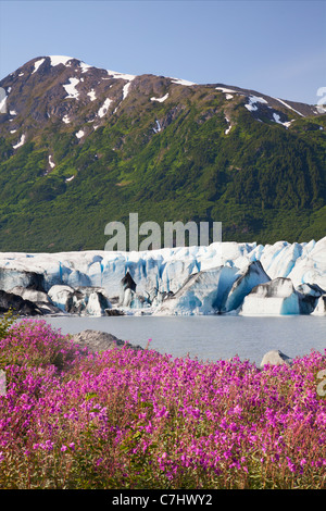 Wildflowers along the lake in front of Spencer Glacier, Chugach National Forest, Alaska. - Stock Photo