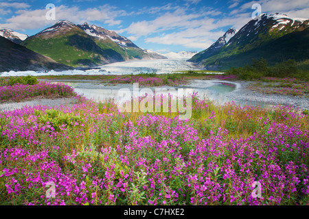 Wildflowers at Spencer Glacier, Chugach National Forest, Alaska. - Stock Photo