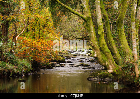 Autumnal river scene, Lake District, England, UK - Stock Photo