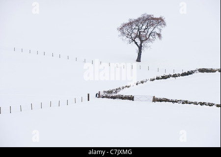 Snowy winter monochrome minimalist view - 1 tree, snow covered hillside, farm fields, stone walls, fence posts, - Stock Photo