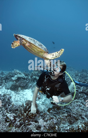 Diver swimming with hawksbill turtle - Stock Photo
