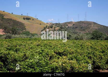 Portugal, Algarve, Near Silves, Countryside & Orange Trees - Stock Photo