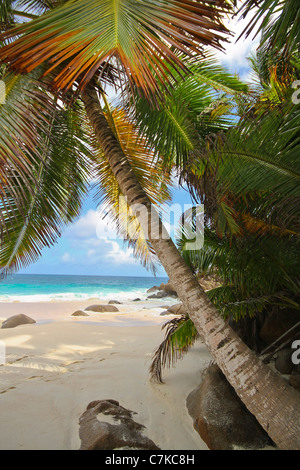 Anse Intendance, Mahe Island, Seychelles. - Stock Photo