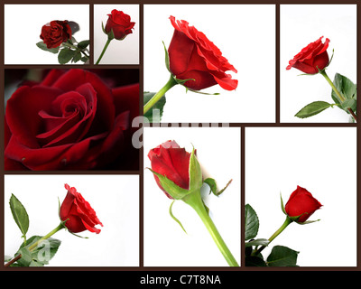 Montage of different red rose flowers collage of pictures - Stock Photo
