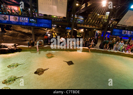 Italy, Liguria, Aquarium of Genoa, people looking at rays - Stock Photo