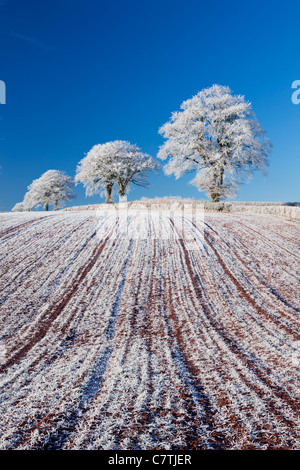 Hoar frosted farmland and trees, Bow, Mid Devon, England. Winter (December) 2010. - Stock Photo