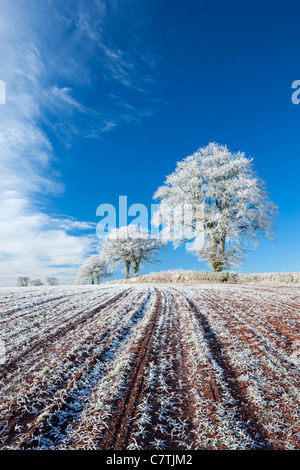 Hoar frosted farmland and trees in winter time, Bow, Mid Devon, England. Winter (December) 2010. - Stock Photo