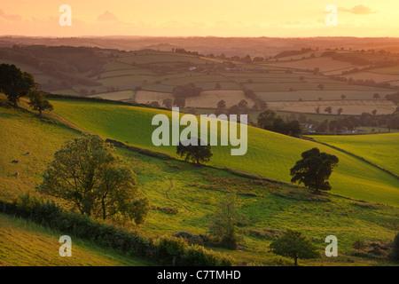Evening sunlight on the rolling fields of rural Devon, Raddon Hills, Devon, England. Summer (June) 2011.