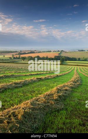 Freshly cut hay meadow, Morchard Bishop, Devon, England. Summer (July) 2011. - Stock Photo