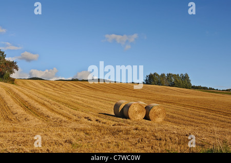 Golden hay bales in the countryside on a perfect sunny day - Stock Photo
