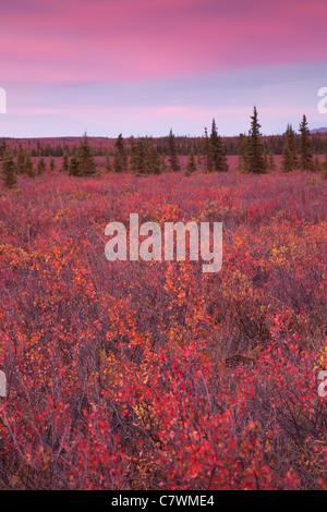 Sunset at Teklanika, Denali National Park, Alaska. - Stock Photo