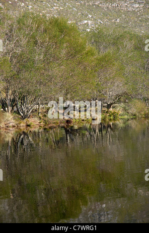 view across reservoir at Silvermine Walks, Cape Town, Western Cape, South Africa - Stock Photo