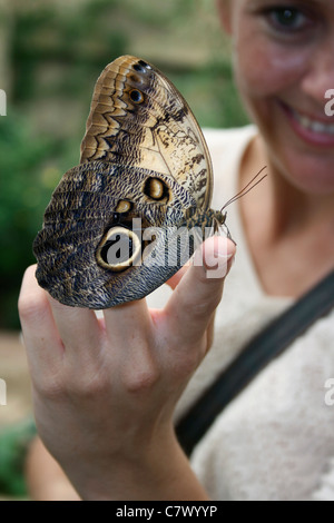 Young woman with an Owl butterfly on her hand. Benalmadena Butterfly Park, Benalmadena Pueblo, Málaga, Costa del - Stock Photo