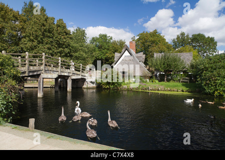Swans and cygnets on River Stour by bridge in Flatford, Essex, UK - Stock Photo