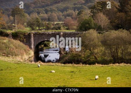 Ireland, Co Wicklow, Glenmalure, Drumgoff, sheep grazing by Avonbeg River bridge - Stock Photo