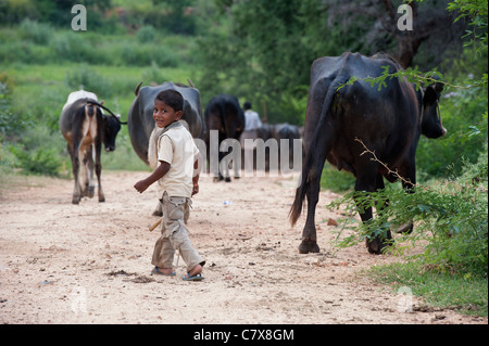 Young rural Indian boy herding water buffalo and cows in the indian countryside. Selective focus. - Stock Photo