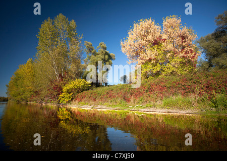 In Autumn, the riparian zone of the Allier river banks (France). On the right of the photograph one can see an Acer - Stock Photo