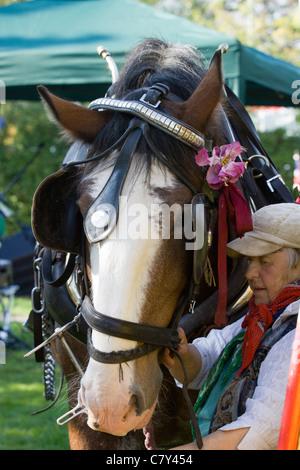 Equus ferus caballus Horse - Stock Photo