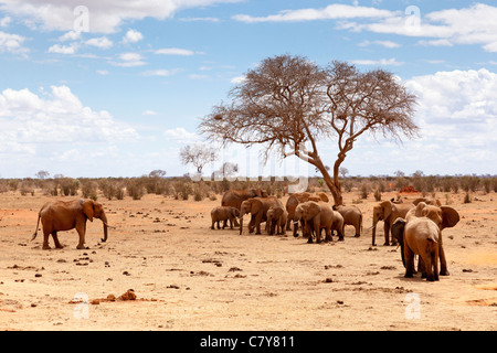 A group of Elephants near a waterhole in Tsavo East National Park, Kenya - Stock Photo