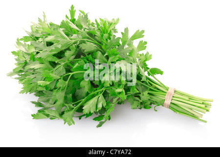 Green parsley bunch - Stock Photo