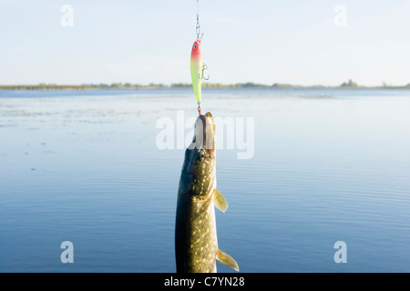 Pike hanging on lure - Stock Photo