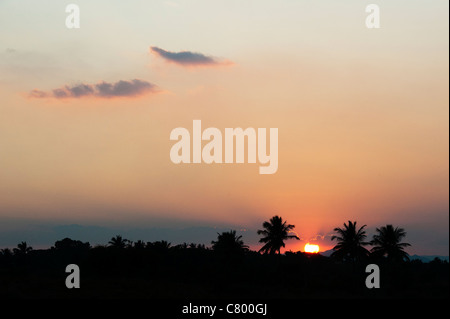 Indian sunset silhouetting palm trees. Andhra Pradesh, India - Stock Photo