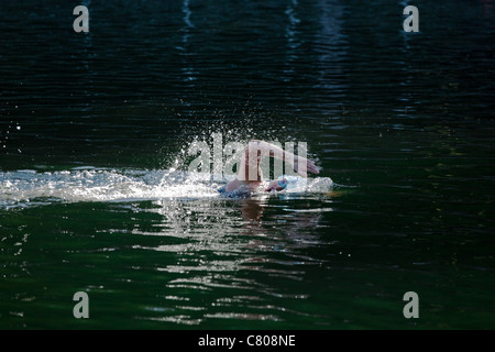 Female swimmer competing in a 5km open water swimming race in Thetis Lake, Victoria, Canada - Stock Photo
