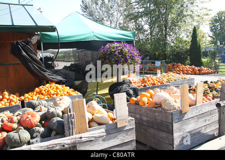 Outdoor market in Fall in Quebec, Canada - Stock Photo
