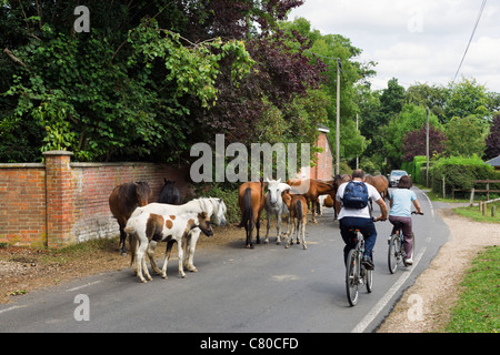Cyclists passing New Forest ponies blocking the road in the village of Burley, New Forest, Hampshire, England, UK - Stock Photo