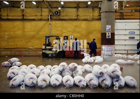 Japan, Tokyo, frozen tunas in the Tsukiji fish market - Stock Photo