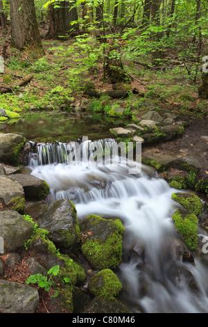 Forest stream in Yosemite National Park, California - Stock Photo
