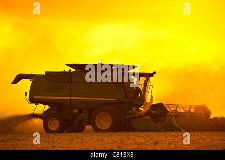 Combine Harvesting soybeans - Stock Photo