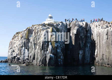 Inner Farne Lighthouse and tourists photographing the seabird colony. Farne Islands, Northumberland Coast, England. - Stock Photo