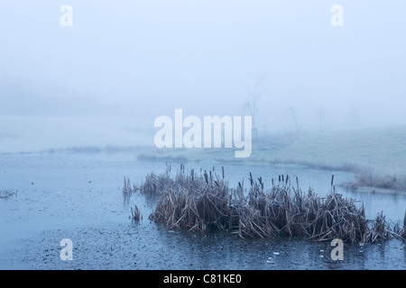 Morning stillness on winter morning in Denmark - Stock Photo