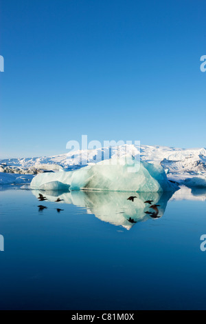 Ducks flying over Jokulsarlon lagoon in south Iceland.  Mirror image of flying birds in the water. - Stock Photo