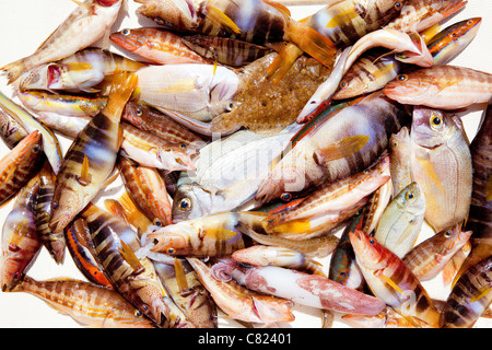 catch of fish in Mediterranean bream squid roack fishes - Stock Photo