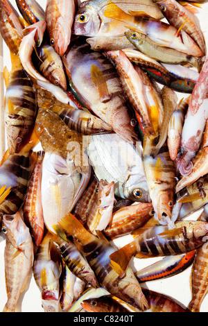 catch of fish in Mediterranean bream squid rock fishes - Stock Photo