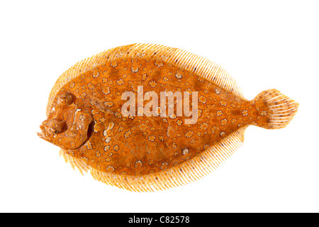 Trubot fish psetta maxima isolated on white stock photo for Fish eye skin