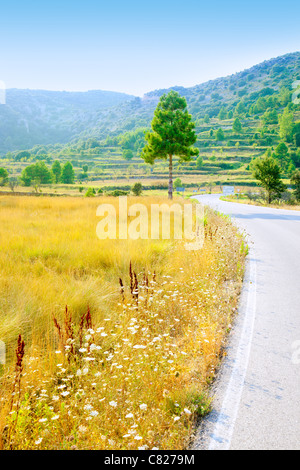 golden grass field near road border in pine tree mountains - Stock Photo