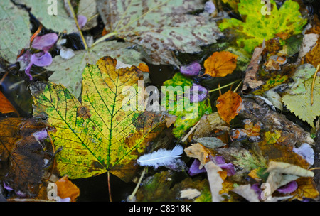 Autumn leaves and flower petals floating in a small river or stream. - Stock Photo