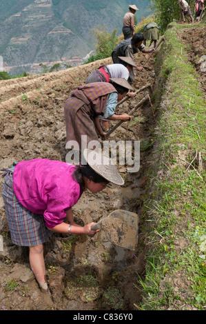 female farmers at work in rice terraces. Radi. Eastern Bhutan - Stock Photo