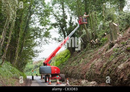 A tree surgeon felling trees via a cherry picker in a deep narrow lane at Irthington, Cumbria - Stock Photo