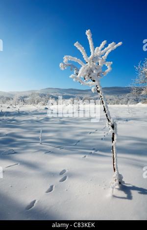 Winter flower - Stock Photo