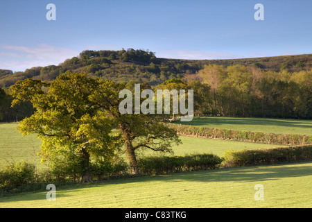 View of Chanctonbury Ring, West Sussex - Stock Photo