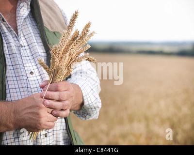 Farmer holding wheat stalks in field - Stock Photo