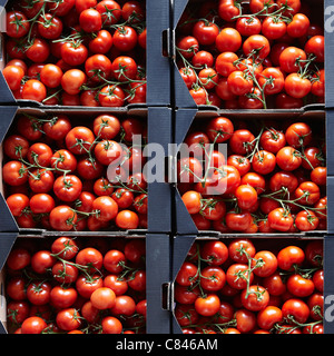 Packages of cherry tomatoes - Stock Photo