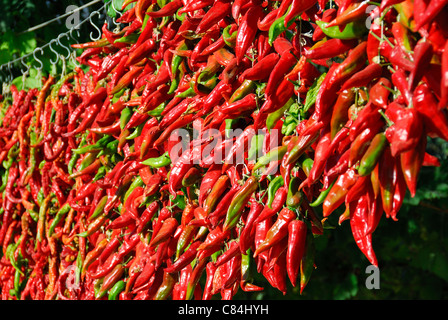 DENIZLI, TURKEY. Lots of fresh red and green chillies drying in the sun. These will be used to make pul biber (chilli - Stock Photo